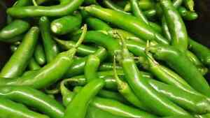 100 Seeds Serrano Chili Seeds Small Jalapeno Hot Peppers