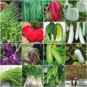 Heirloom-Garden-vegetable-seeds-Non-GMO-organic-Asparagus-Purple-Carrots-Leek