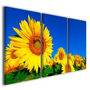 Quadri moderni fiori girasole Sunflower stampe su tela canvas ...