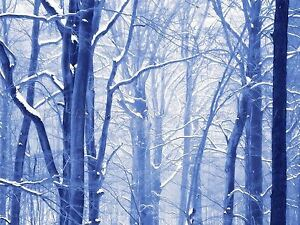 PHOTO-PAINTING-DIGITAL-WINTER-FOREST-SCENE-18X24-039-039-POSTER-ART-PRINT-LF047