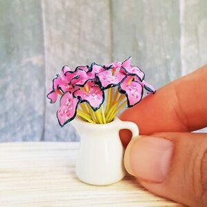 s-l300 Monstera Dollhouse Plant on phalaenopsis plant, pineapple plant, aspidistra plant, red and green leaf house plant, orchid plant, momordica plant, bird of paradise plant, xanadu plant, dieffenbachia plant, prayer plant, mammillaria plant, anthurium plant, aralia plant, banana plant, alocasia plant, bucephalandra plant, yucca plant, liana plant, cheese plant, musa plant,