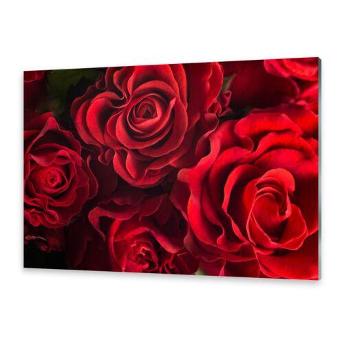 Acrylglasbilder Wandbild aus Plexiglas® Bild Rote Rosen