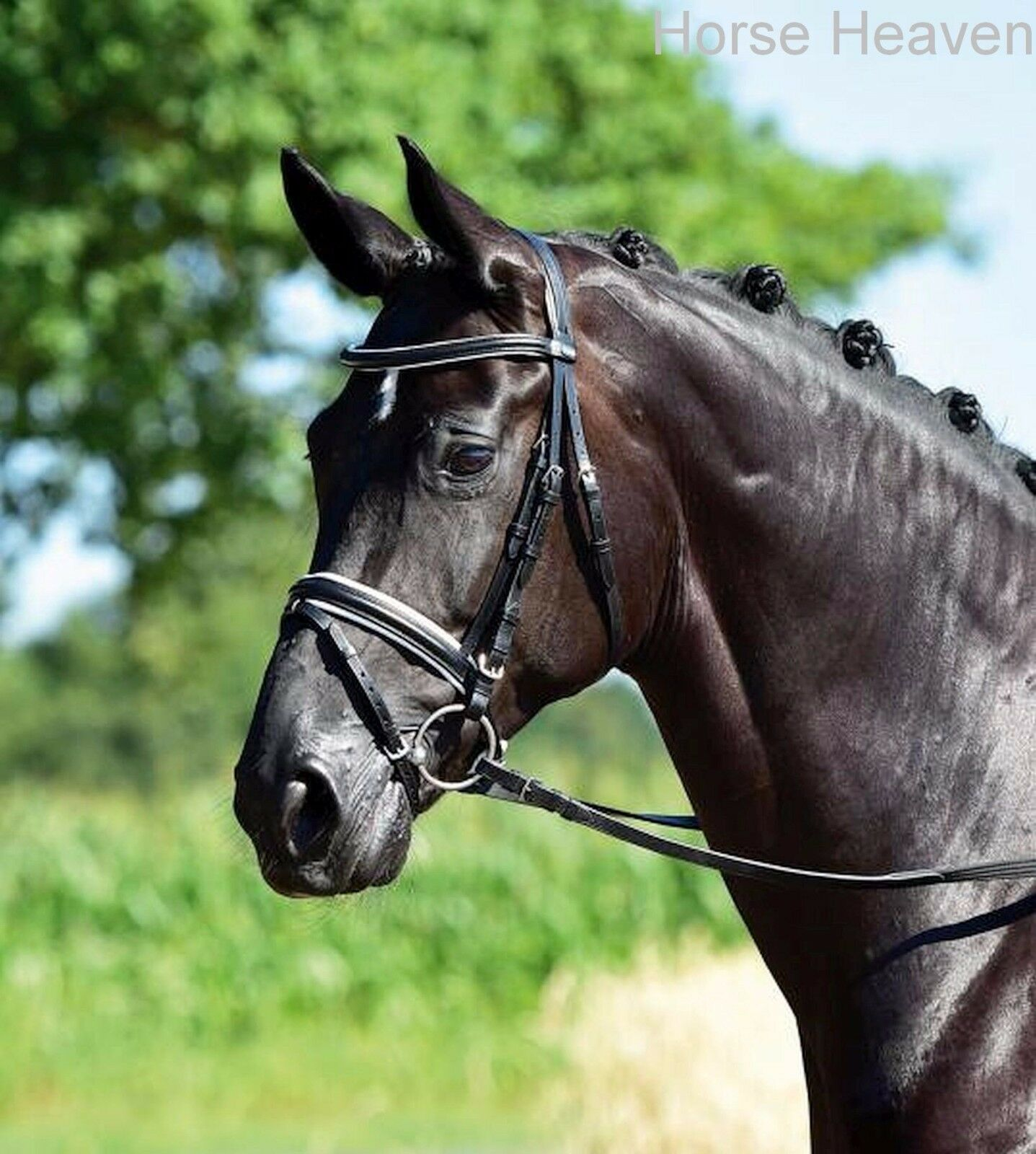Busse Profi-Soft Flash Flash Flash Snaffle Bridle Non-Crank, Soft-Touch Headpiece incl Reins 5da1ef