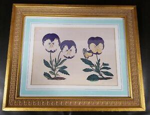 """Vintage BOTANICAL ART PRINT Pansies, Gold Frame, Matted, 12"""" x 15"""", """"Lady Peel"""""""