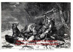 Wolf Pack Attacks Horse & Rider Traveller, Large 1850s Antique Engraving Print