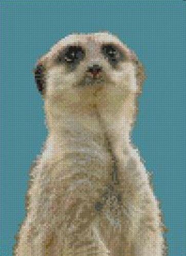 Meer Kat 3 Complete Counted Cross Stitch Kit Meerkat