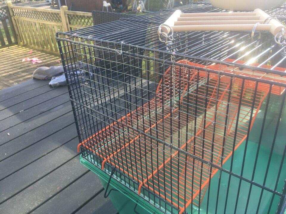 Hamster, Bur til hamster/ørkenrotter
