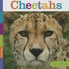 Cheetahs by Kate Riggs (Hardback, 2014)