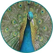 30 Custom Peacock Art Personalized Address Labels