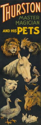 "M28 enorme de 17 /""X51/"" Vintage 1898 Magic Usa /& Mascotas Animales Mago Cartel"