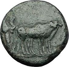 AUGUSTUS 27BC Philippi Macedonia PRIESTS Founding City Oxen Roman Coin i59268