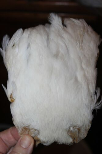 Fly Tying Natural White Hen Neck cape