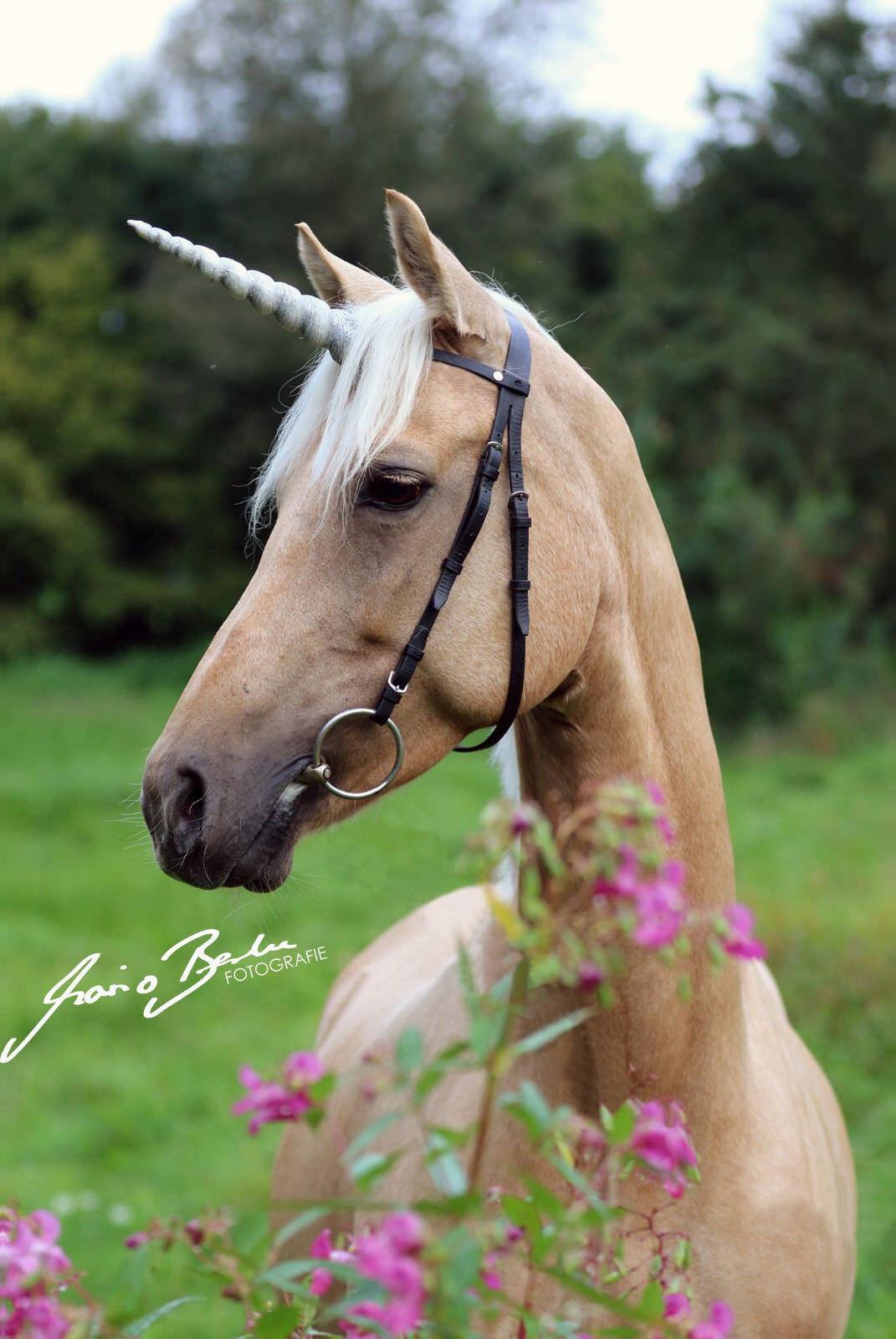 Horsefantasy caballo unicornio cuerno para horn frenillo Horse Unicorn horn para for Bridle tipo 3 11a2d1