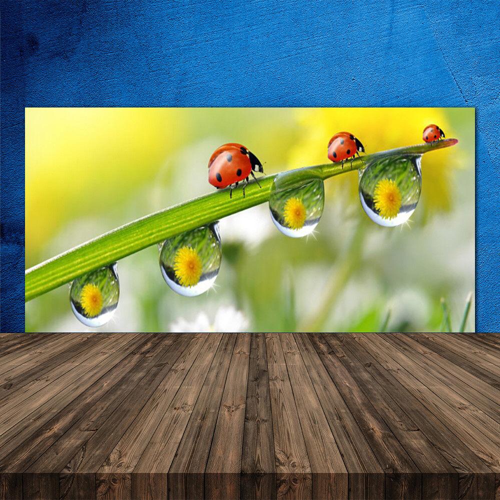 Crédence de cuisine en verre Panneau 120x60 Nature Rosée Feuille Coccinelle