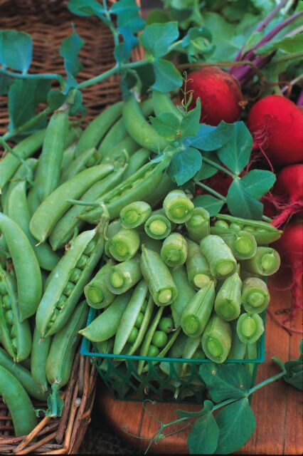 Vegetable - Pea - Sugar Snap - 40 Seeds - Economy