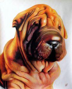 Ritratto portrait di SHAR PEI (dog) - Matite colorate cm. 60 x 70 - Italia - Ritratto portrait di SHAR PEI (dog) - Matite colorate cm. 60 x 70 - Italia
