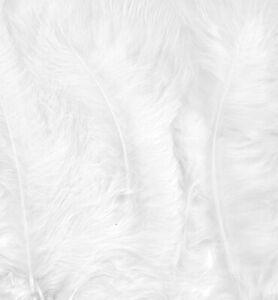 Marabufedern-15-Stueck-weiss-white-Federn-zur-Deko-marabou-feathers-12228-2802