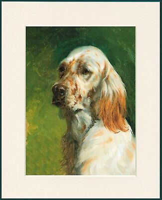 ENGLISH SETTER TWO DOGS HEAD STUDY LOVELY DOG PRINT MOUNTED READY TO FRAME