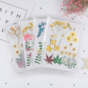 Natural-Dried-Flowers-combination-DIY-Pressed-Herbarium-Flower-Decorative-ZH