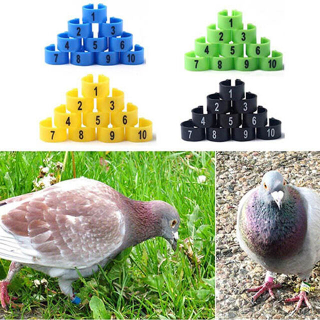 IT- HK- 100Pcs Bird Poultry Chicks Plastic 1-100 Numbered Pigeon Leg Bands Rings