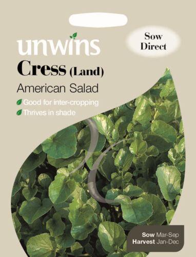 1000 graines UNWINS paquet illustré-Cresson de terre américaine salade
