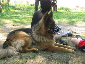 New-Strong-Metal-Wire-Basket-Dog-Muzzle-for-Shepherd-Labrador-Fully-Padded-K9