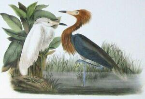 Antique-Reproduction-Art-Print-Reddish-Egret-John-James-Audubon-Bird-Pair-Mate