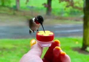 Unique Hum-button ™ Mini Hand Held Hummingbird Feeder Nifty Thrifty Bouton-afficher Le Titre D'origine Les Couleurs Sont Frappantes