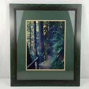 Hoh Rain Forest Original Photography Green Trees Framed Photograph Bill Cannon