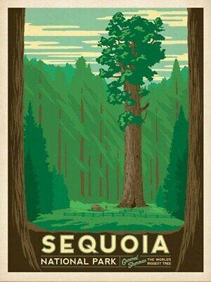 "SEQUOIA NATIONAL PARK  2x3 /""Photo Fridge Magnet"