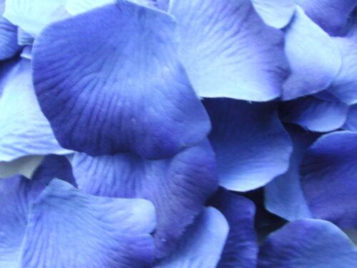 100 TWO TONE ROYAL BLUE QUALITY SILK ROSE PETALS CONFETTI//WEDDING//DECORATION.