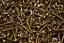thumbnail 1 - Zinc Plated Carbon Steel Wood Screw Round Pan Head PZ2 Pozi 4x16mm Bulk Buy