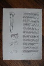 'PICK OF PUNCH 'AUTHENTIC VINTAGE 1956 PRINTED DOUBLE SIDED PAGE HUMOUR - 9