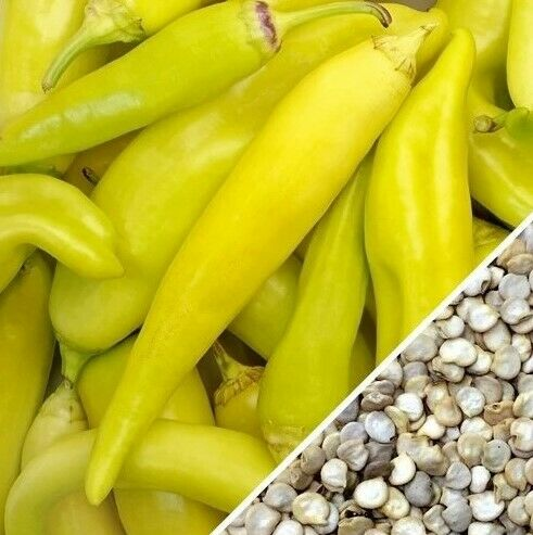 Details about  /Banana Pepper Seed 100 SeedsNON GMO Hungarian Yellow Wax Pepper Hybrid Class