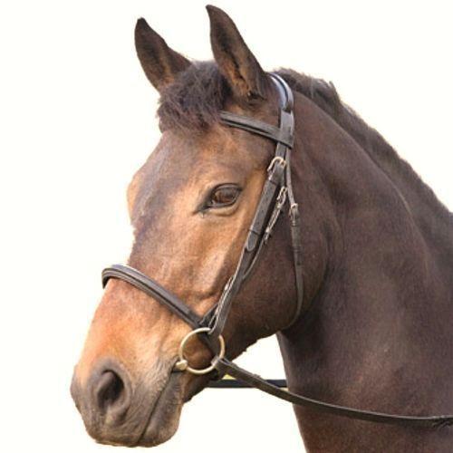 NUOVA NERA Shires Pony Cob Full LEATHER COMFORT Bridle redini in gomma NO FLASH 292