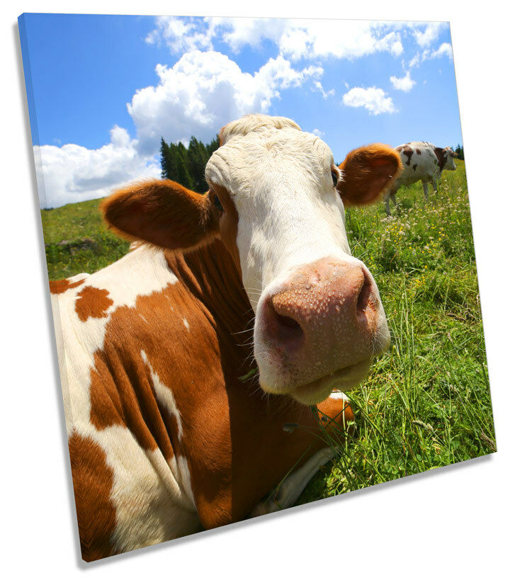 Cow Face Field SQUARE CANVAS WALL ART Framed Print
