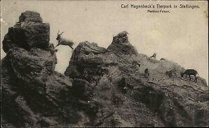 Stellingen-Hamburg-1910-Tierpark-Carl-Hagenbeck-Zoo-Markhor-Felsen-Tiere-Gemse