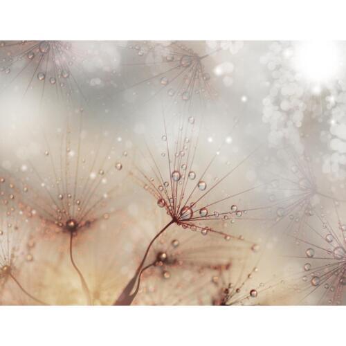 Vlies Fototapete Blumen Pusteblume Tapete Wandbilder XXL Wandtapete Dekoration R