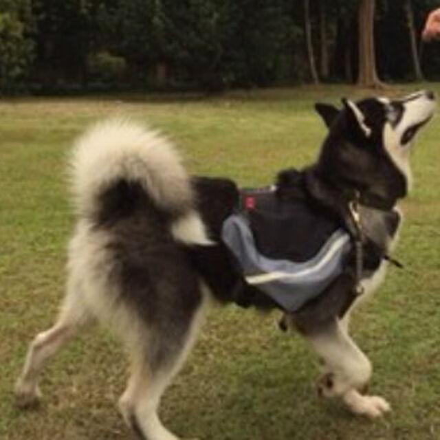 Pet Dog Backpack Carrier Saddle Bag Pet Outdoor Hiking Camping Travel New