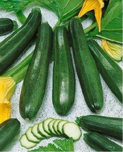 Burpee Summer Winter Squash Vegetable Seeds 10 Varieties You Choose WILL MAIL