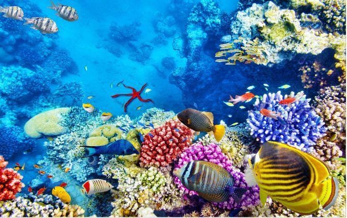 3D Halobios Reef bluee 03 Floor WallPaper Murals Wall Print Decal 5D AJ WALLPAPER