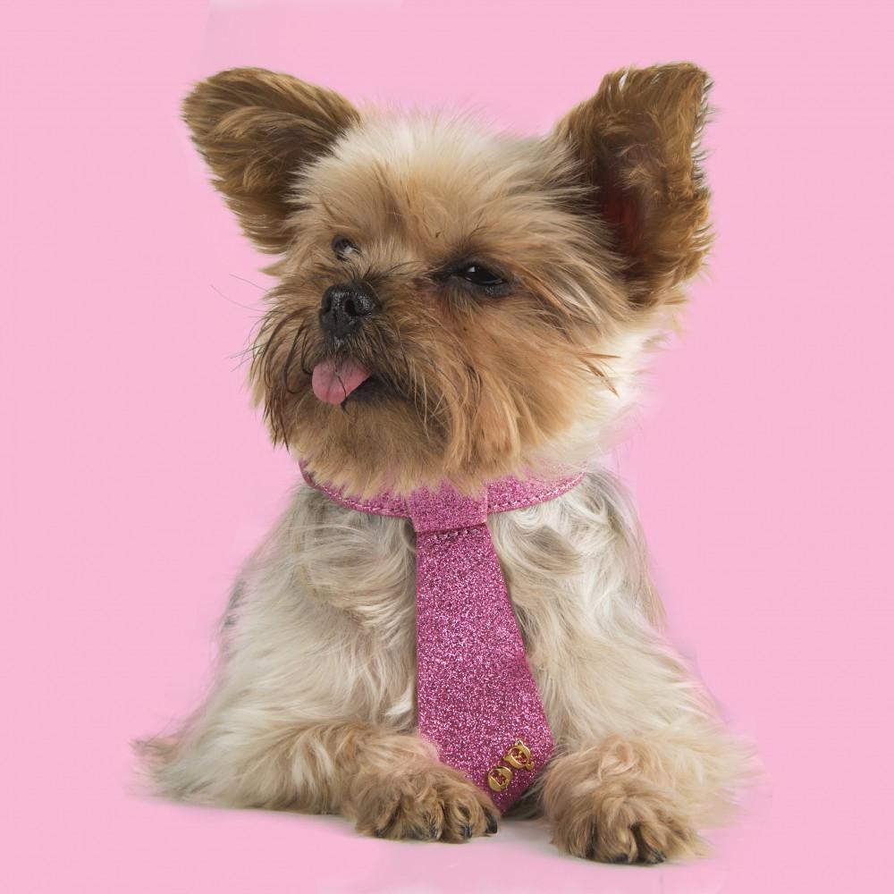 265 DESIGNER Rosa LOVE DOG LEASH & BRACELET +NECKTIE COLLAR Hollywood Small Dog
