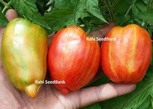 a deep red heart-shaped tomato J/&L Gardens bred Sleeping Giant