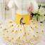 Pet-Small-Dog-Cat-Clothes-Puppy-Cotton-Lace-Tutu-Skirt-Apparel-Princess-Dress thumbnail 47