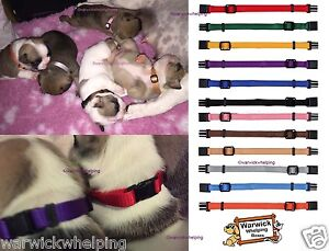 Puppy-ID-Bands-Soft-Collars-Whelping-pack-set-6-or-12-pack-collar-identification