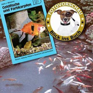 Ratgeber goldfische farbkarpfen gartenteich koiteichteich for Goldfische gartenteich