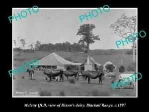 OLD-POSTCARD-SIZE-PHOTO-OF-MALENY-QLD-VIEW-OF-DIXONS-DAIRY-BLACKALL-RANGE-1897