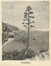 Stampa antica NAPOLI POSILLIPO veduta panoramica 1891 Old antique print