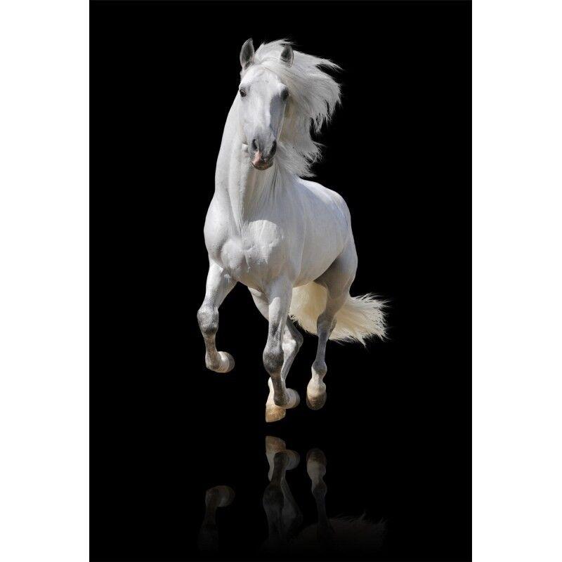 Stickers muraux déco déco déco : cheval blanc 1327 afd68c