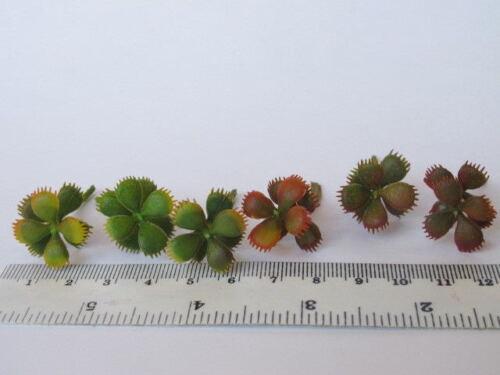 2 miniature cactus cactacee STRAPPATA Freddo Caldo Varie Tonalità Pianta Craft Doll House L1